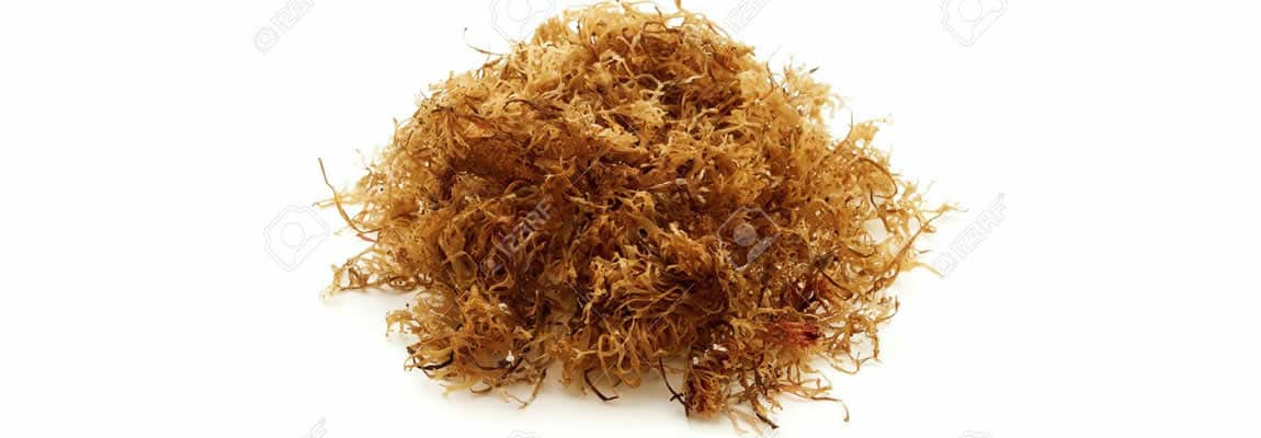 Cure Colds With Carageen Seaweed