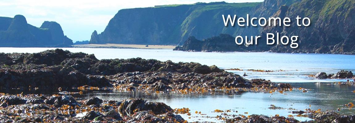 The Sea Gardener Blog